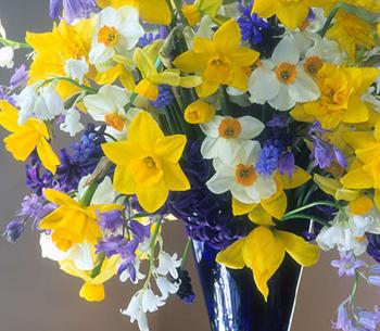 Bulbs In Bouquets