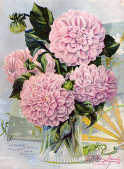 Dahlia Bouquet Artwork