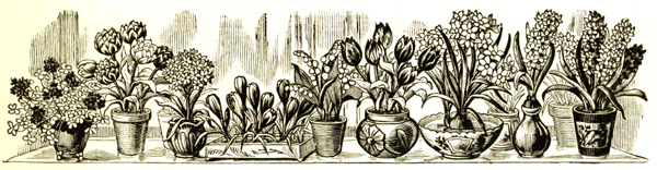 forced bulbs, Henderson catalog, 1900