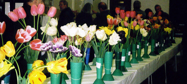 Heirloom Flower Tulip Show 1