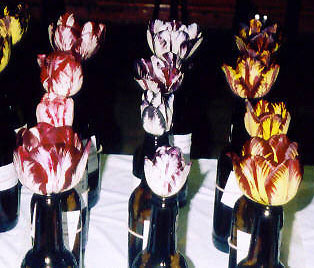 Heirloom Flower Flames and Feathers Tulips