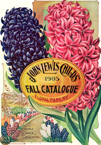 Hyacinth History 101 – www.OldHouseGardens.com