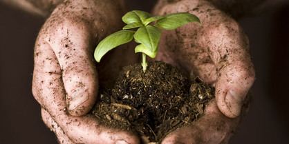 Celebrate Dirt with the International Year of Soils