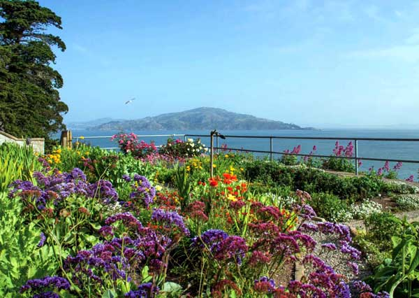 The Astonishing Gardens (and Bulbs) of Alcatraz – www.oldhousegardens.com/Alcatraz