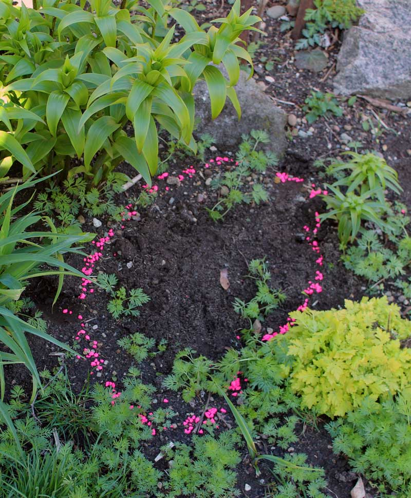 Fish Tank Gravel and a Cell Phone: Improving Your Spring Garden NOW – www.OldHouseGardens.com