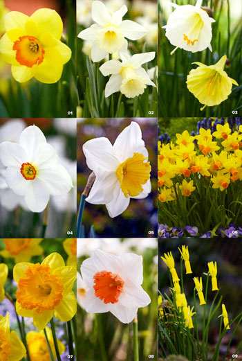Heirloom Daffodils (and OHG) Featured in <i>Garden Design</i> – www.OldHouseGardens.com
