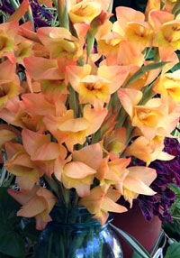 From Our Newsletter Gladiolus
