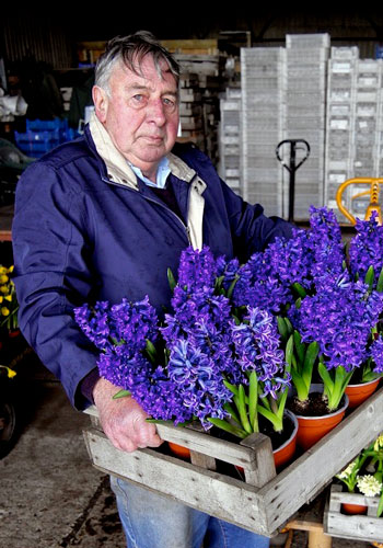 Meet Alan Shipp, the Hyacinth Master – www.OldHouseGardens.com