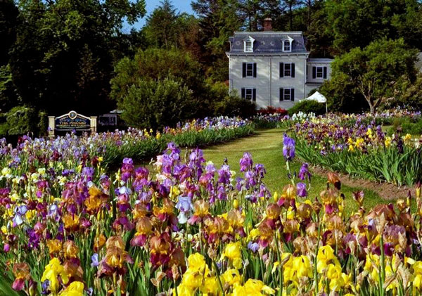 History in Bloom: Presby Memorial Iris Garden – www.OldHouseGardens.com