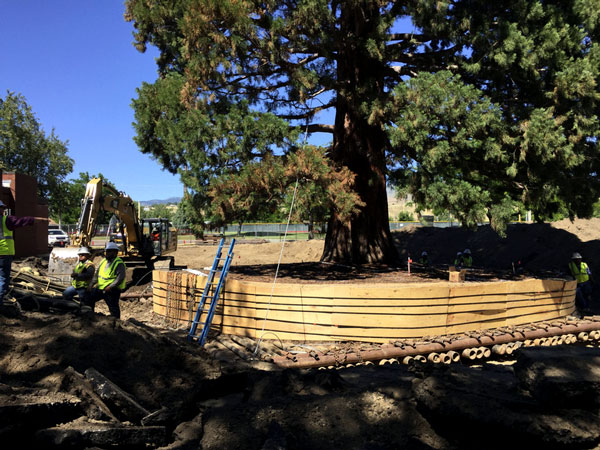 Century-Old Sequoia Moved in Boise – www.oldhousegardens.com