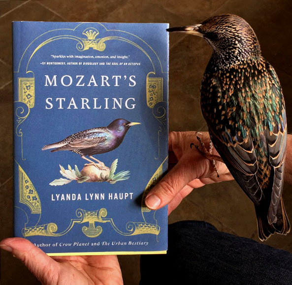 <i>Mozart's Starling</i>: Seeing Nature with New Eyes – www.OldHouseGardens.com