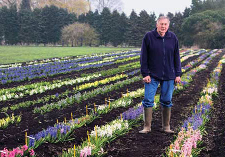"<i>Heirloom Gardener</i> Spotlights the ""Noah of Hyacinths</a>"" – www.oldhousegardens.com"