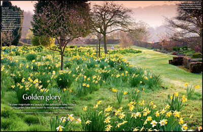 The Heirloom Daffodil Orchard at England s Felley Priory 433adff30
