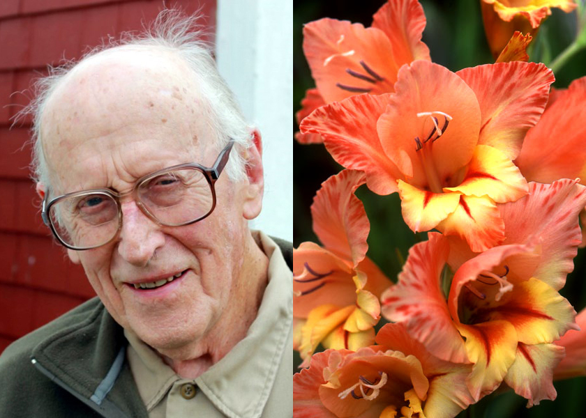 56f5d86e Farewell to Paul Cates, Hero of Heirloom Glads